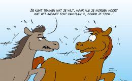 Schriktraining voor paarden Prinsjesdag op het Scheveningse strand
