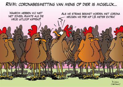 RIVM: coronabesmetting van mens op dier mogelijk Corona, coronavirus, coronacrisis, COVID-19