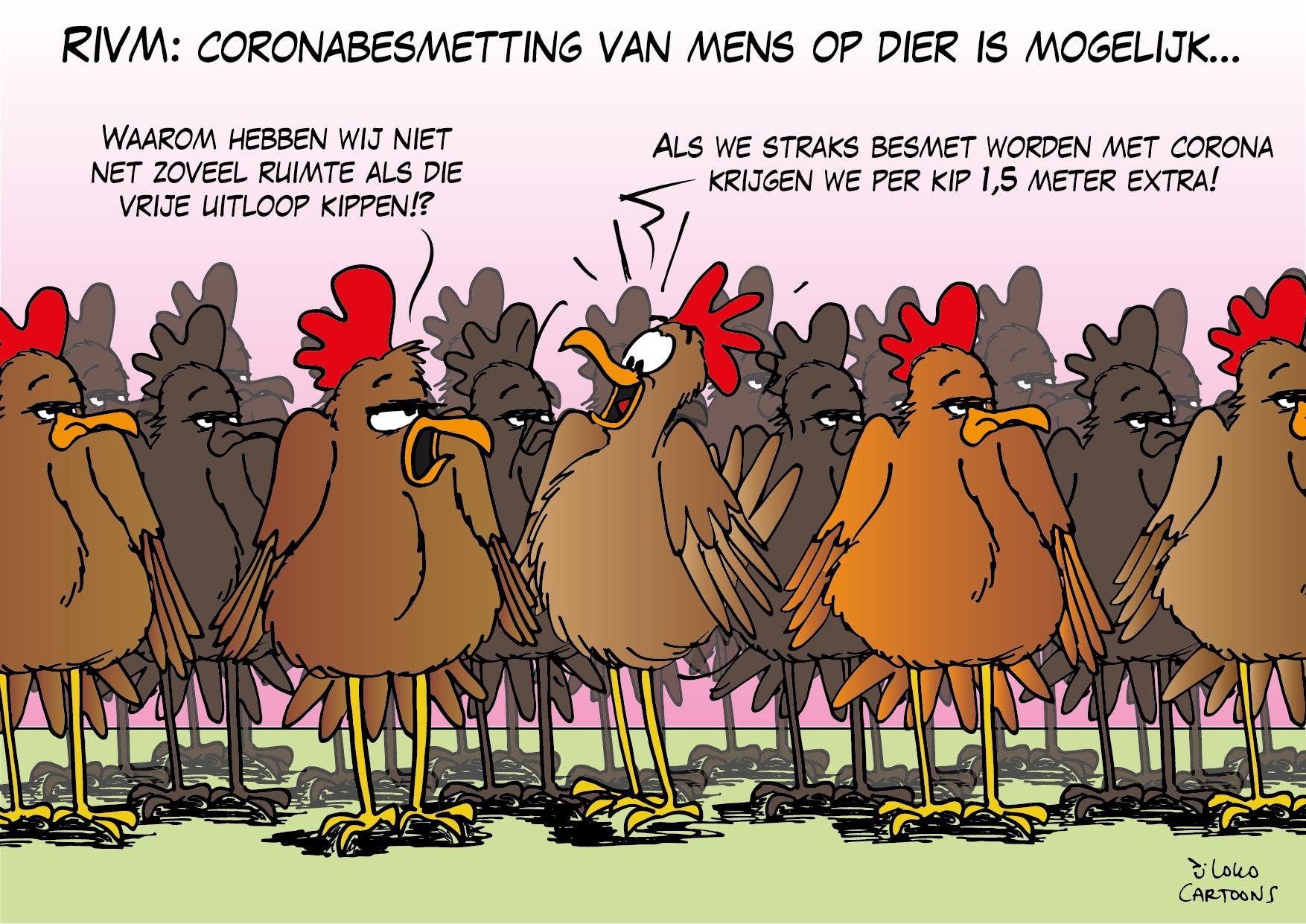 RIVM: coronabesmetting van mens op dier mogelijk…