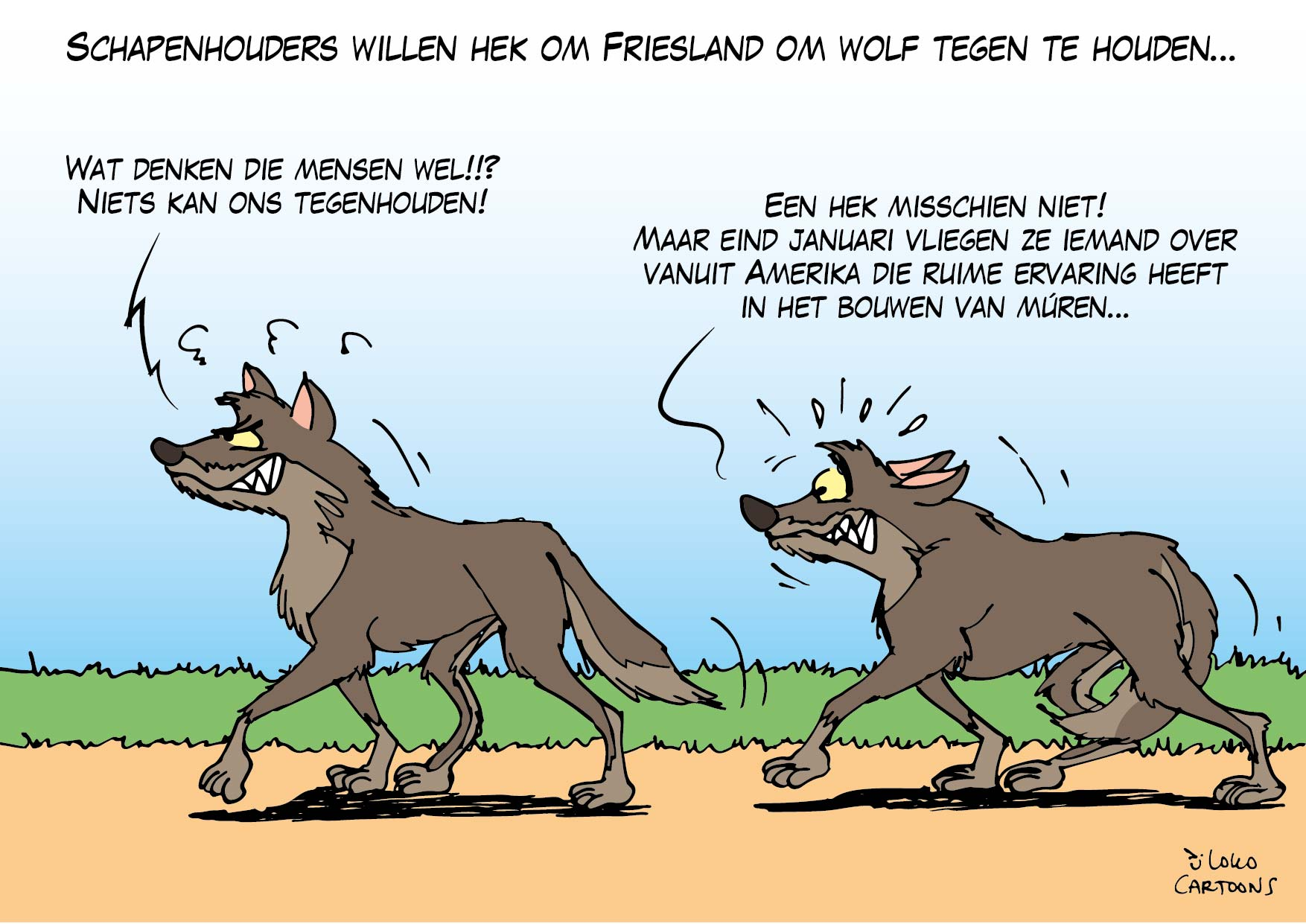 Schapenhouders willen hek om Friesland om wolf tegen te houden…